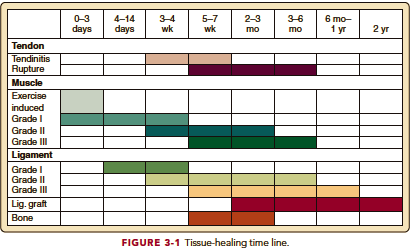 How Long Will This Take Time Frames Of Tissue Healing Lifecare